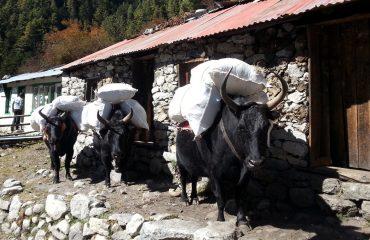 Monjo - Nepal