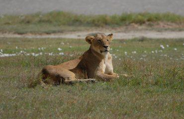 Opsiyonel Safari Turu