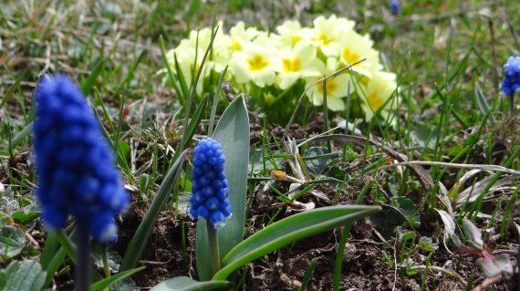 Günübirlik Bahar Yürüyüşleri
