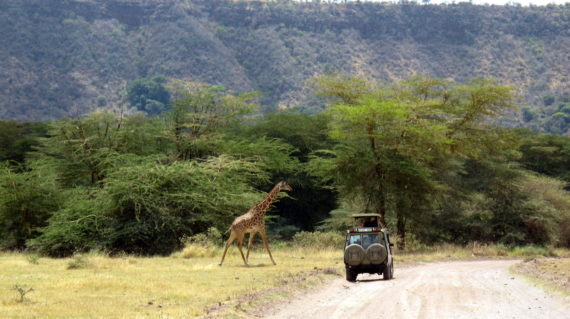 Tanzanya Safari