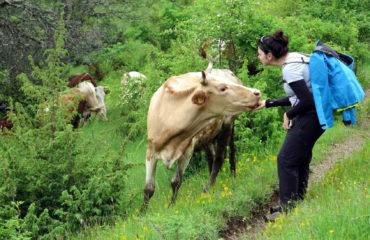 Balkan Dağları'nın Büyüsü-002